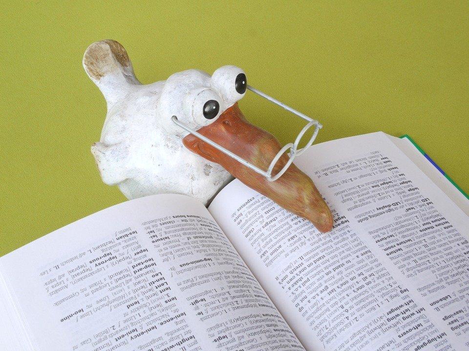 Schule, Buch, Wissen, Studium, Bildung, Lesen, Lernen